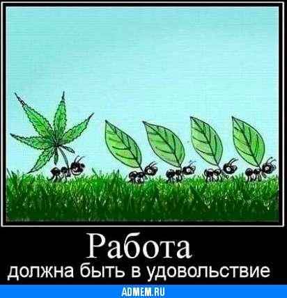 Демотиваторы Смешные картинки Работа: admem.ru/1377263094