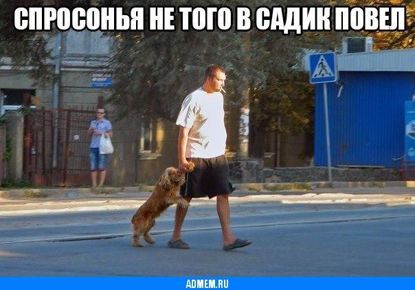 Фото приколы собаки