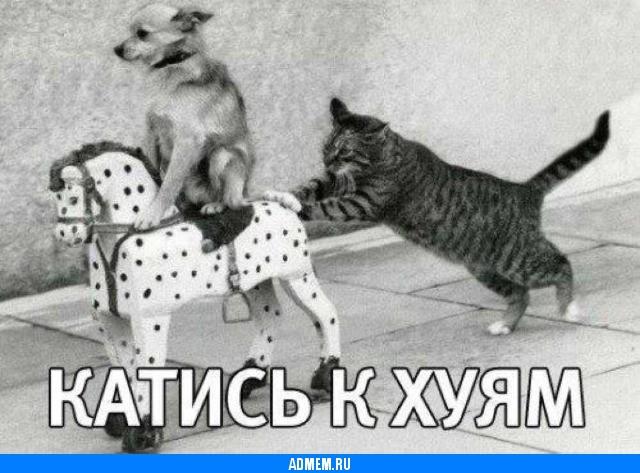 Собаки котэ фото приколы