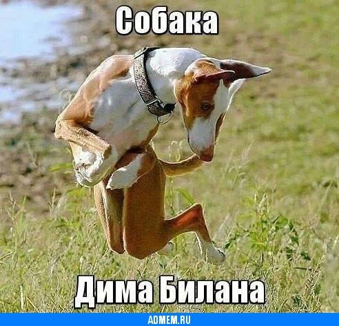 Собаки дима билан